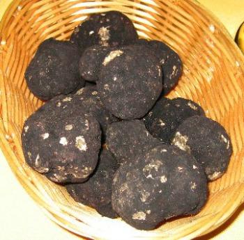 Oregon Black Truffles