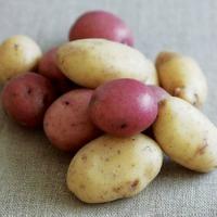 New Potatoes with Citrus Horseradish Dressing