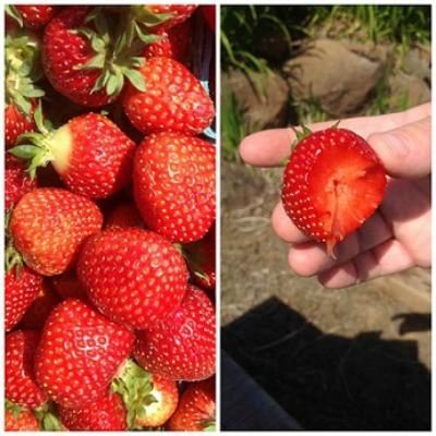 Strawberries Pernod