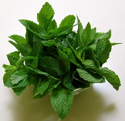 Tea Time Enhancers - Fresh Mint leaves