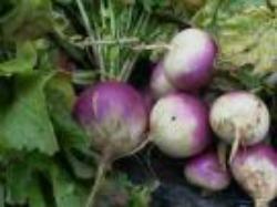 Peeling Turnips