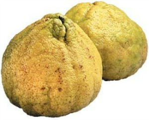 Uniq Fruit, Unique Fruit, Ugli Fruit