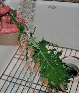 Washing Whole Kale Leaves