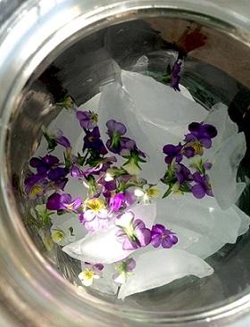 Viola Ice