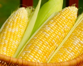 Corn Recipe Collection