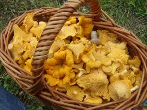 Chanterelle Mushroom Custard