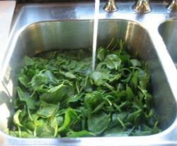 Spinach Rockefeller