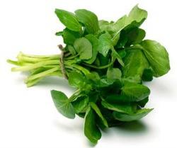 atercress and Mushroom Salad